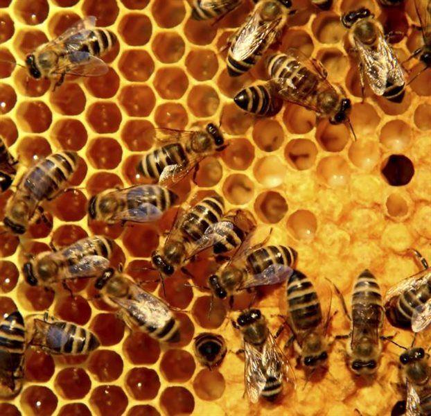Η μελισσοκομία έχει πολύ βαθιές ρίζες