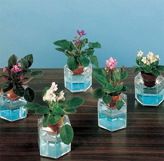 Miniature African Violets (from: http://parkseed.com )    !!!!!!!!!!! One of my Favorite plants made mini............and they are called Teacup violets ......tea makes everything better ;)