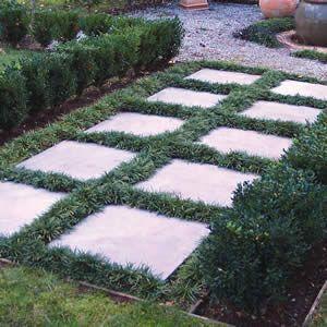 dwarf mondo grass between pavers - Google Search