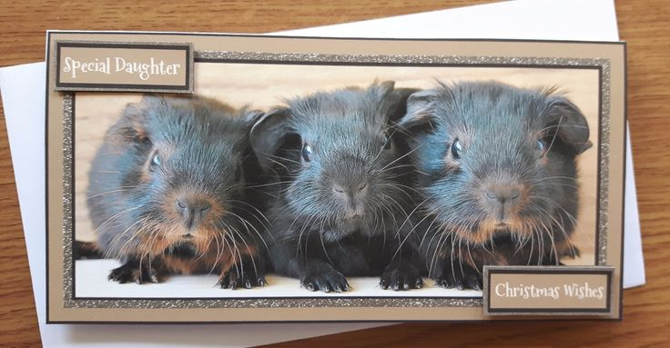 Christmas card for Daughter with cute baby guinea pigs