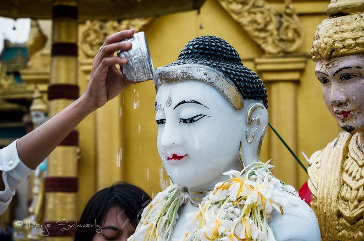 Buddhist devotee pours water on a statue of Buddha at the Shwedagon Pagoda, Yangon, Myanmar, Asia. © Marja Schwartz