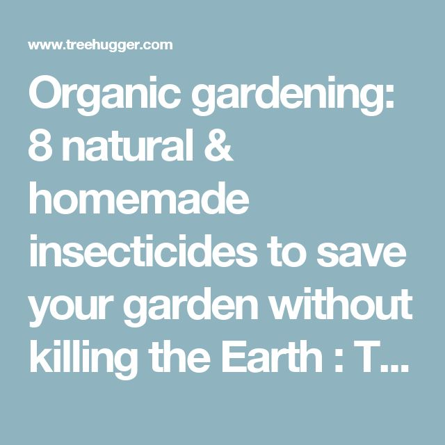 Organic gardening: 8 natural & homemade insecticides to save your garden without killing the Earth : TreeHugger