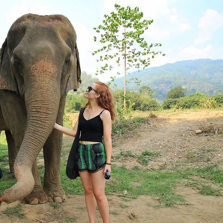 The Elephant Sanctuary, Chiang Mai Thailand
