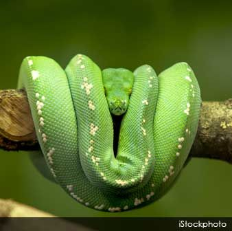 25+ best ideas about About snakes on Pinterest | All about snakes ...