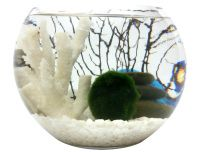 Marimo terrarium with white coral, sea fan and rock cairn.