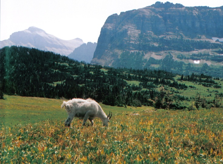 Glacier National Park, Montana.  Hike to Hidden Lake