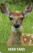 Fawn-Doe-Rosea - wildlife park in St.Croix Falls Wisconsin