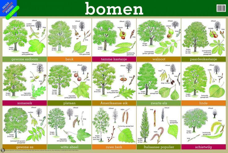 Poster BOMEN