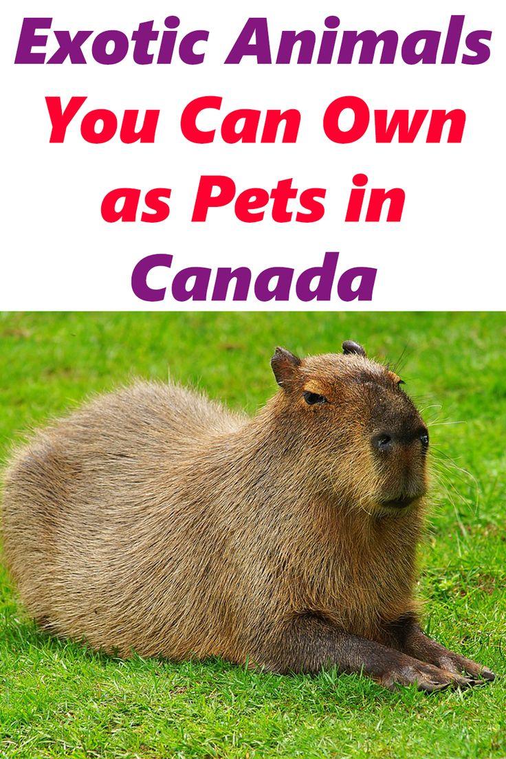 Unique Pets