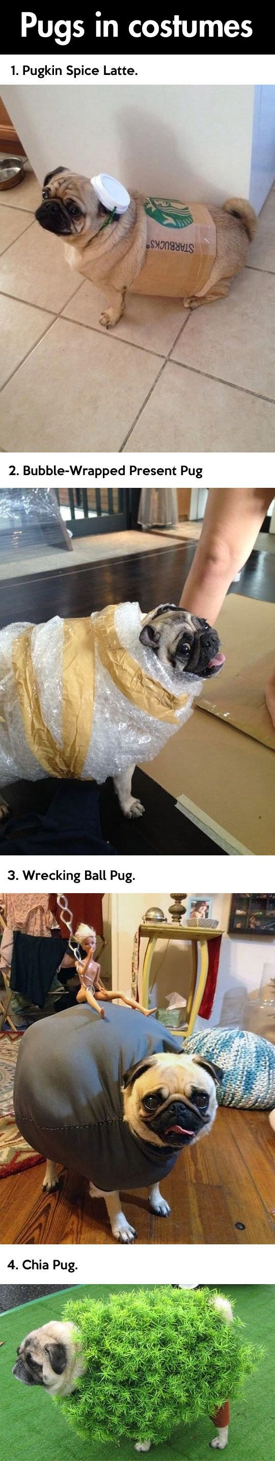 Pugs can really rock a costume…