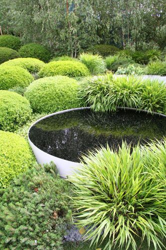 Buxus and grass