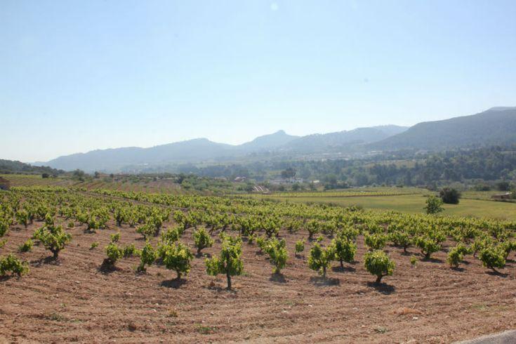 Wine routes Catalonia Penedes-1