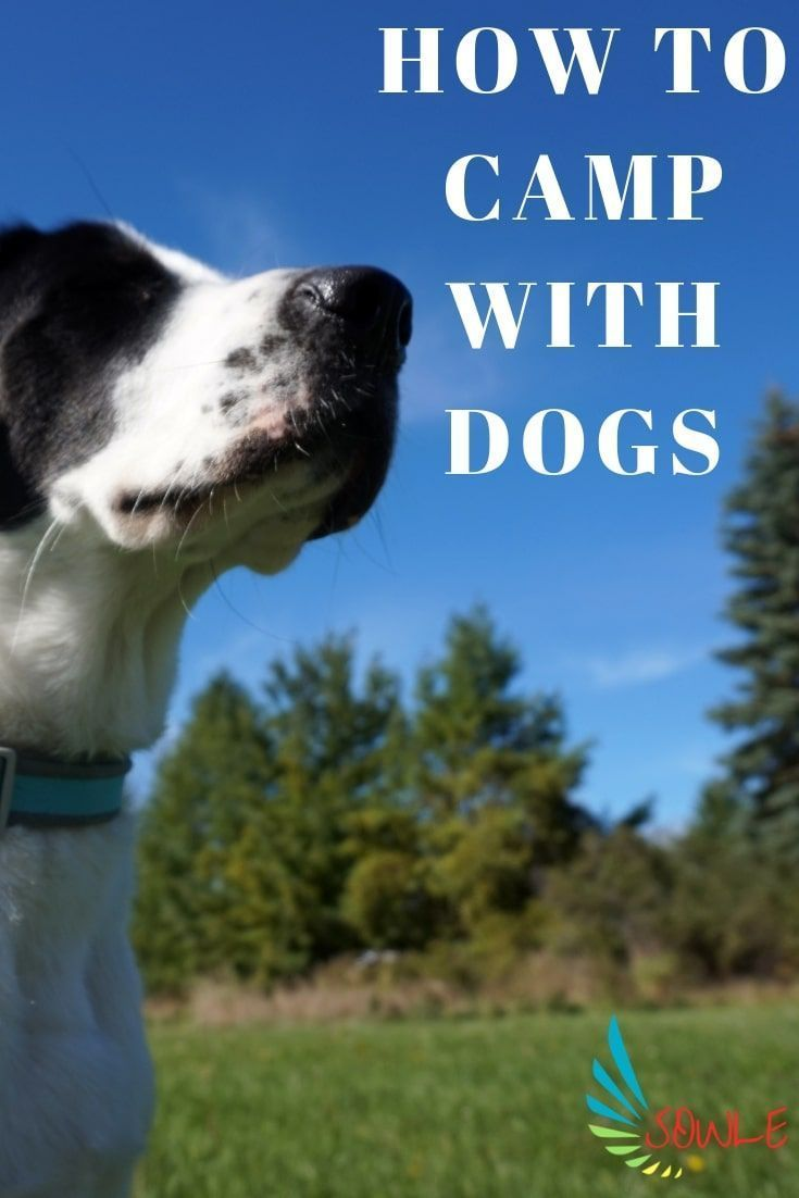 How To Camp With Dogs And Must Haves In 2020 Dogs Dog Camping Camping