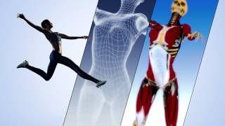 Teaser 2014 anatomie 3D Lyon 1 #MOOC Fovea anatomy