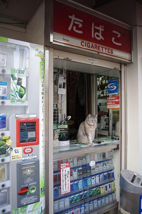 778:  cigar store(May I help you?) (via nekojimakeibu)