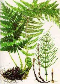 2 ст. л. травы хвоща залить кипятком (1,5-2 стакана), подержать на водяной бане 15-20 минут процедить.     принимать по полстакана 3 раза в день после еды.