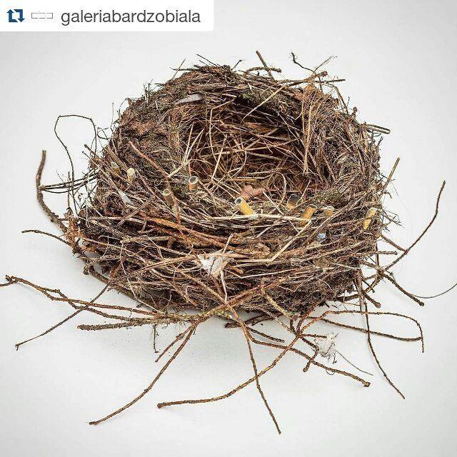 """#Repost @galeriabardzobiala  Wiedzieliście że niedopałki papierosów są  dobrodziejstwem dla ptasich piskląt ?! """"Naukowcy uważają że ptaki zabierające niedopałki do swoich gniazd wykorzystują zawarte w nich aromatyczne związki chemiczne do wzmocnienia systemu odpornościowego piskląt co w konsekwencji pobudza rozwój ptaków. Nikotyna znajdująca się w materiale filtracyjnym posiada właściwości owadobójcze dzięki czemu gniazdo i pisklęta mogą być utrzymywane są w stanie wolnym od pasożytów.""""…"""
