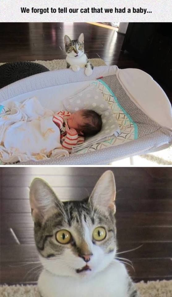 To tell our cat we're having a baby.   Funny pictures, best quotes, funny memes pictures and jokes - FunnyKey.com /><meta name=
