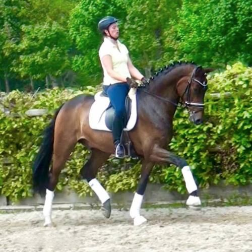 Fine Magic HW makes all dreams come true. He is a horse of highly sought after quality and a super fancy mover, who knows to impress due to his...