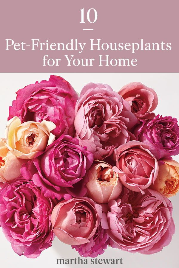 10 Pet Friendly Houseplants For Your Home Houseplants Pet Friendly Blooming Flowers
