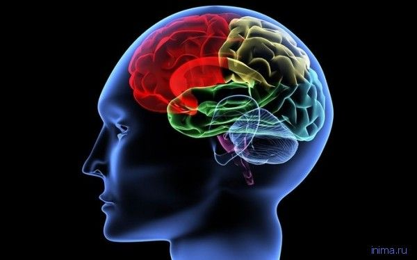 Как включить мозги Для тех, у кого за новогодние каникулы мозги атрофировались, публикуем несколько полезных советов из книги доктора Джека Льюиса и Адриана Вебстера «Мозг: краткое руководство» - Кладовая инета - Страна Мам