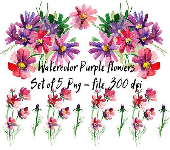 Purple flowers. Kosmeya. Hand painted. от VectorGraphicArts