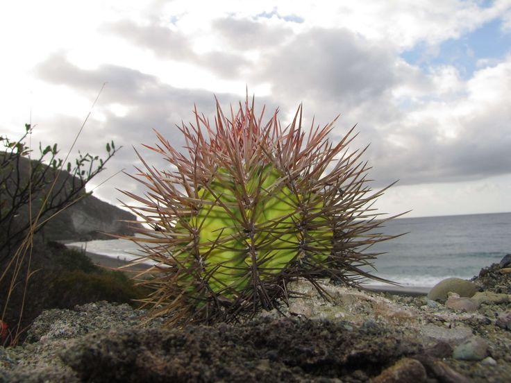 Nyerj páros belépőt az őszi kaktusz kiállításra a Füvészkertbe! - egy egyszerű kérdésre kell csupán válaszolni, hogy esélyed legyen a nyerésre. https://viragotegymosolyert.hu/nyerj-belepot-az-oszi-kaktusz-kiallitasra/