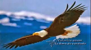 Valorize quem Te Ama de verdade: A Renovação da Águia...