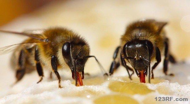 BIG_bee types