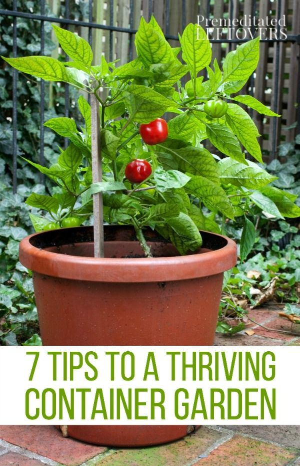 Tips for a Thriving Container Garden- Grow healthy and productive plants in  containers of all types with these helpful gardening tips.