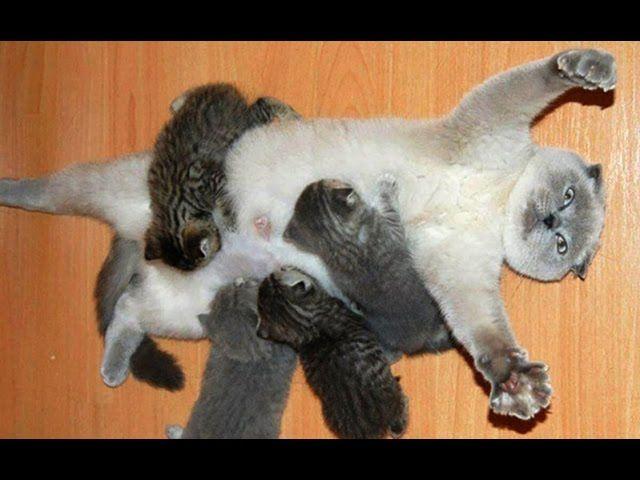 Мама кошка и котята, каково это - быть матерью  http://salecats.com/video/97-mama-koshka-i-kotjata.html