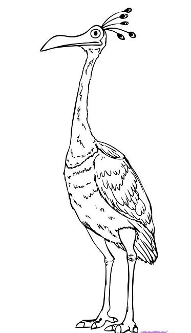 Birds Pictures For Coloring | 650x373