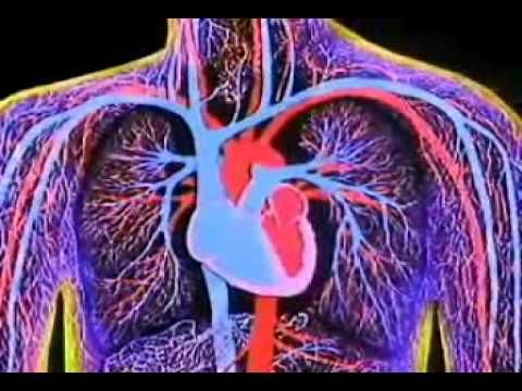 3D ANIMATION OF WORKING OF HEART.