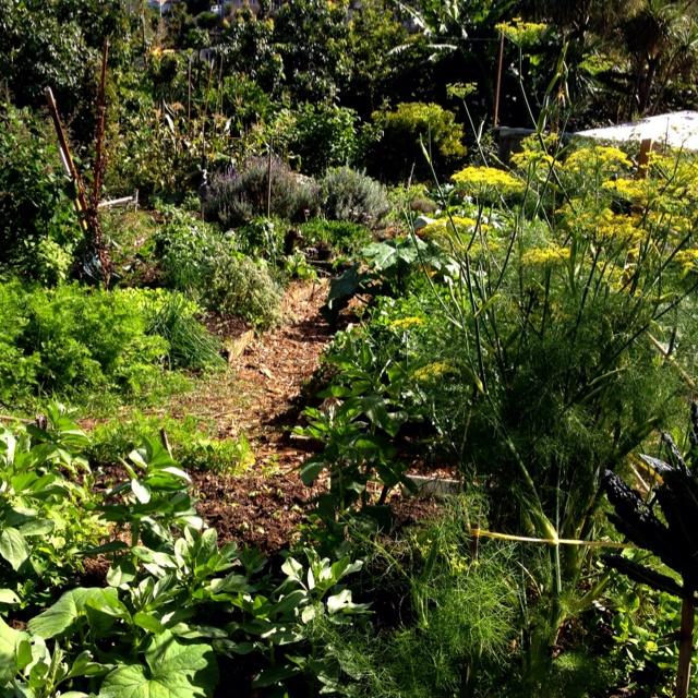 Get cheaper, tastier, healthier,  locally grown veggies at your local community gardens.  - shot taken at Kelmarna Gardens, Auckland, New Zealand.