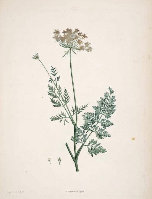 La botanique de J.J. Rousseau