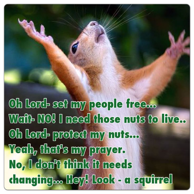Squirrel humor from The random brain of Carter