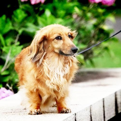 dog piccies :)