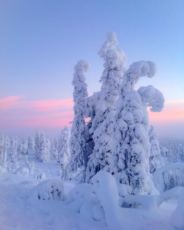 Snow laden trees (Lapland, Finland) by Virpi (@virpula) on Instagram