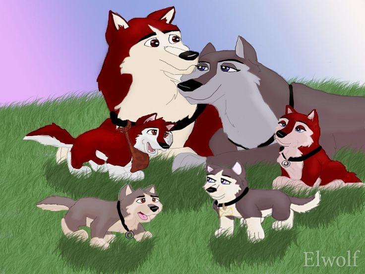 Картинки собака коди