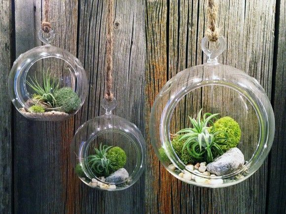 Set of 3 glass orb terrariums hanging planter vase
