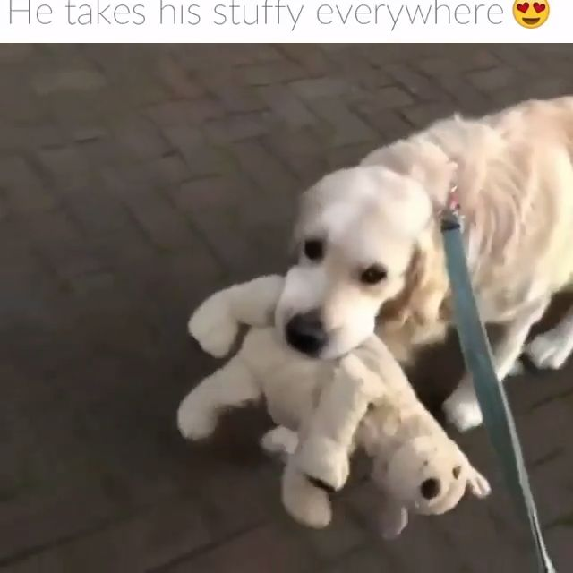 Where he goes, the stuffy goes 😂… | Funny Video Posts | Hilarious Video Memes | Funny So True Videos | Funny Videos For Adults | Laugh So Hard Vi…