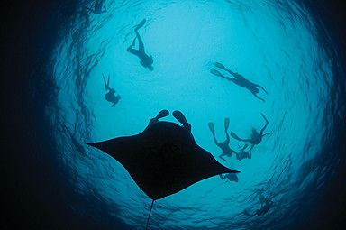 Manta on Call. A once-in a lifetime memory. Accommodation and surfing bookings info@tropicsurf.net