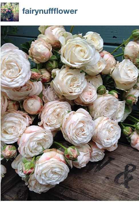 Bombastic spray rose. Photo from Fairynuff flower on Instagram
