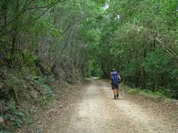 outeniqua trail - Google Search