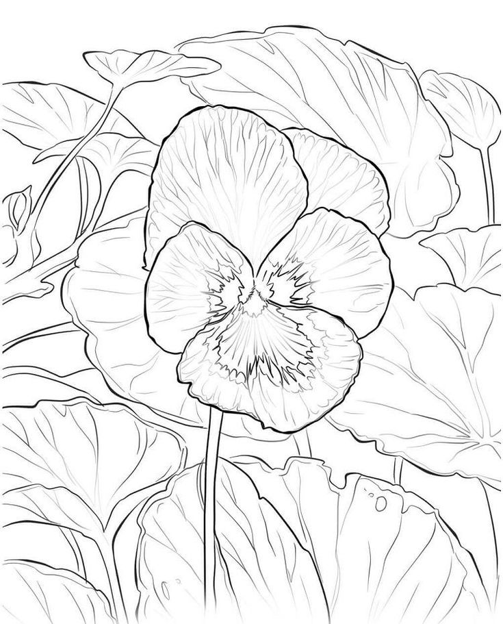 Rhode Island Flower Coloring Pages Flower coloring pages