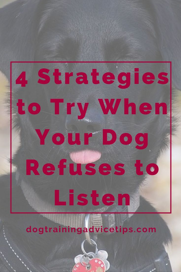 4 Strategies to Try When Your Dog Refuses to Listen | Dog Training Tips | Dog Obedience Training | Dog Training Ideas |