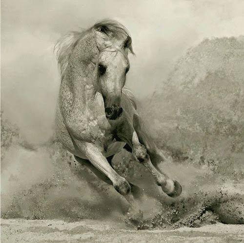 Breathtaking Arabians Breeding Horse Photography by Wojtek Kwiatkowski | Smile Greek