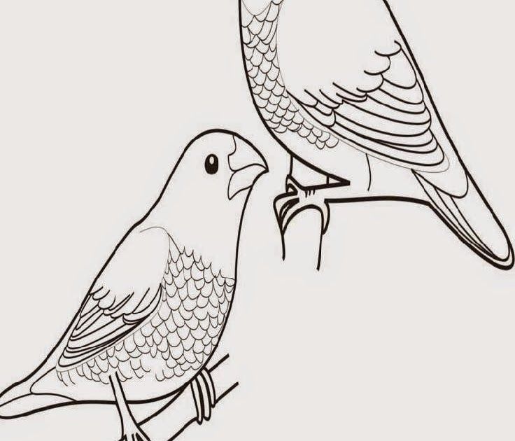 Contoh Gambar Hewan Burung Jom Download Bermacam Contoh Gambar Binatang Untuk Mewarna Yang Macam Macam Dan Contoh Adaptasi Morfolog Gambar Hewan Hewan Burung
