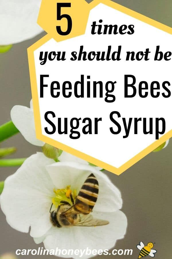 When Should You Stop Feeding Bees Here Are 5 Times You Should Not Be Feeding Bees Sugar Syrup Carolinahoneybees Feedingbees In 2020 Feeding Bees Bee Bee Syrup
