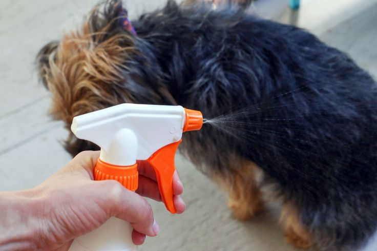 """The overpowering aroma of """"eau de dog"""" may be the one thing you don't like about your best friend.  Dogs are wonderful companions, but let's face it -- they can get downright stinky. Say goodbye to smelly-dog days forever with this natural, homemade coat-freshening spritz."""